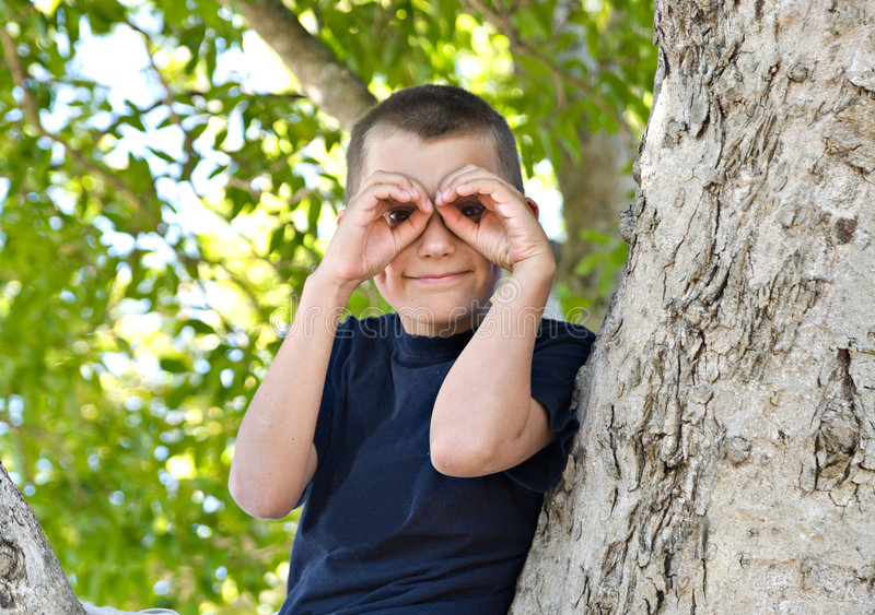 Download Boy In A Tree Stock Photo - Image: 7040990