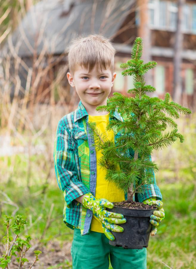 Boy with tree seedling in hands royalty free stock image