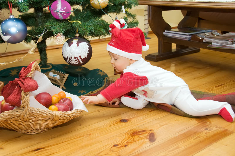 Boy under christmas tree. First Christmas. Baby boy is sitting under trimmed christmas tree on blanket. Baby is trying to reach basket full of fruits stock photography