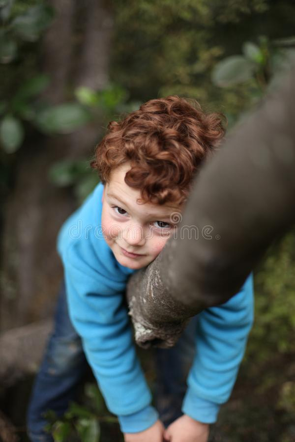Boy up a tree in his happy place. stock images