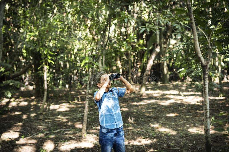Boy using binoculars in the forest stock images
