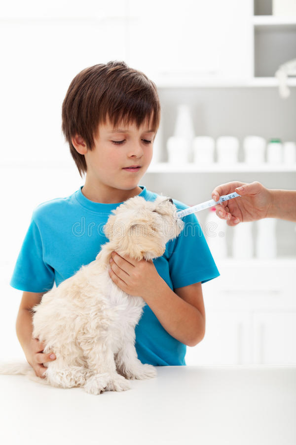 Boy at the veterinary doctor with his little doggy royalty free stock photo