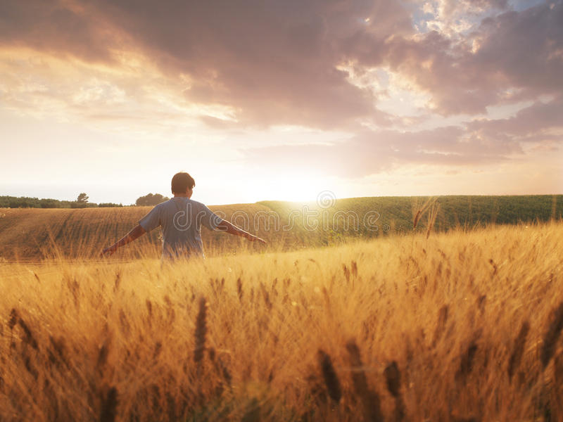 Boy walking through wheat field stock photography