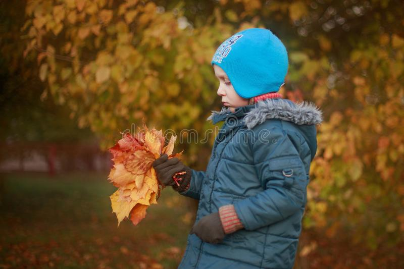 The boy walks and collects leaves royalty free stock images