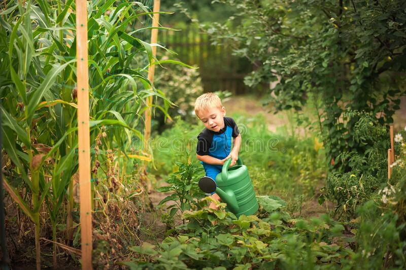 A boy watering flowers and a vegetable garden with a watering can. The boy helps with the summer garden. Children`s games with wat royalty free stock images