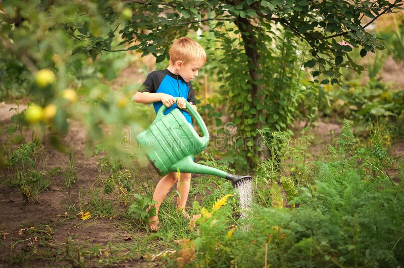A boy watering flowers and a vegetable garden with a watering can. The boy helps with the summer garden. Children`s games with wat stock photos