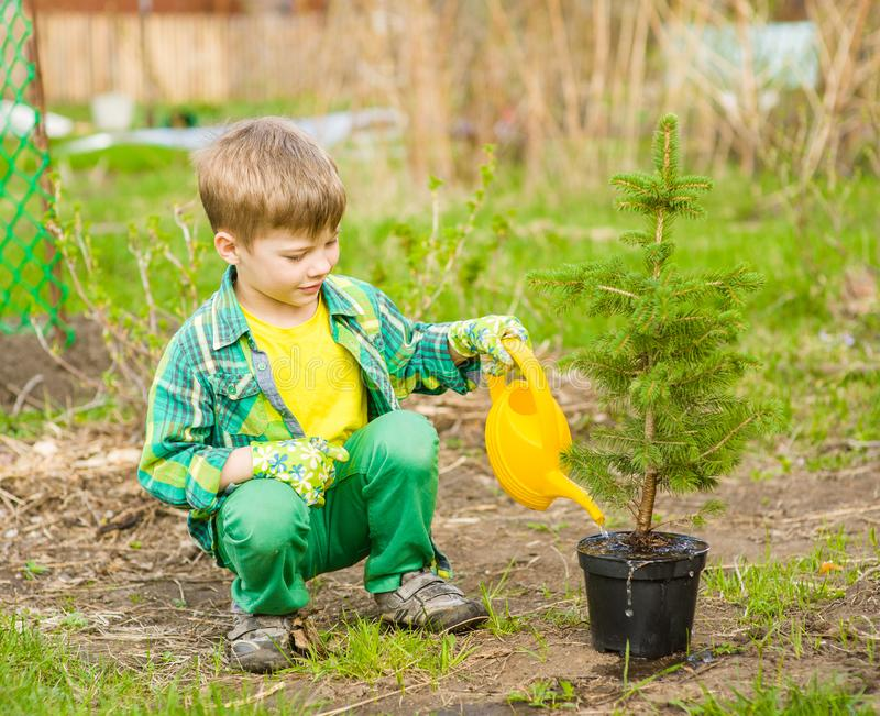 Boy watering a sapling tree stock image