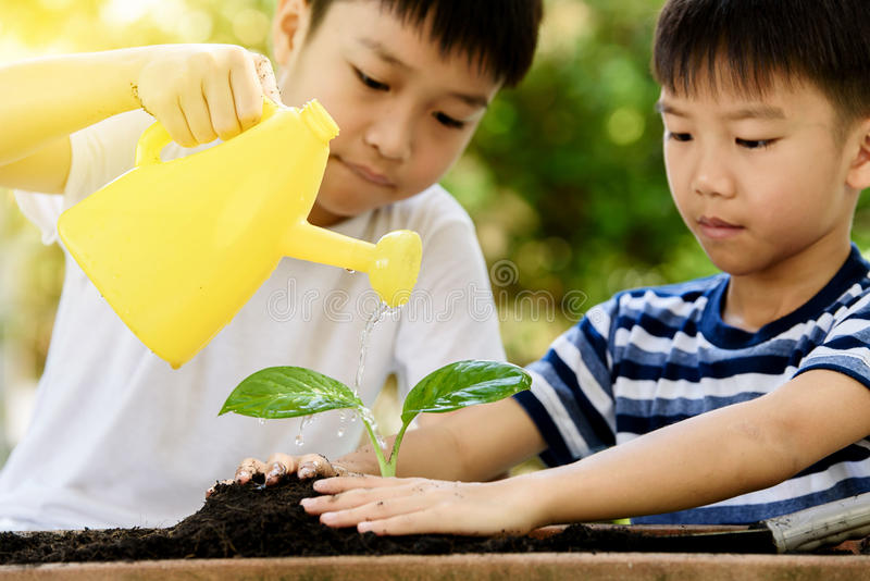 Boy watering on young seedling. Selective focus at hand, Young Thai boy water on little seedling on the black soil in the garden. Earthday concept stock photos