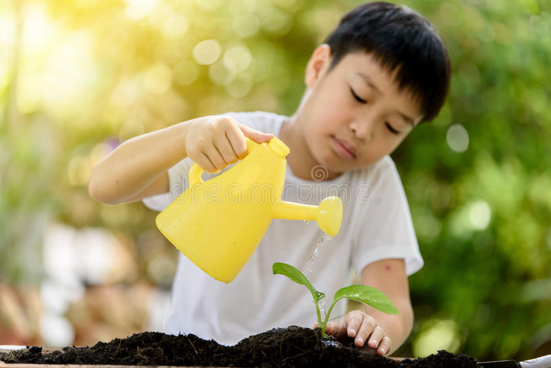 Boy watering on young seedling. Selective focus at hand, Young Thai boy water on little seedling on the black soil in the garden. Earthday concept royalty free stock images