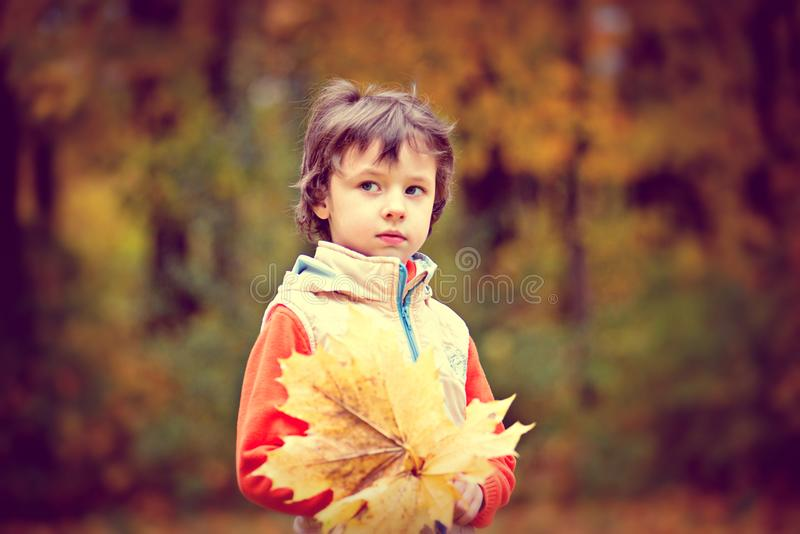 Boy Wearing White and Red Zip Jacket Holding Brown Maple Leaf stock image