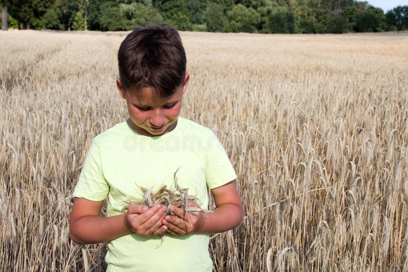Boy in the wheat field stock photos
