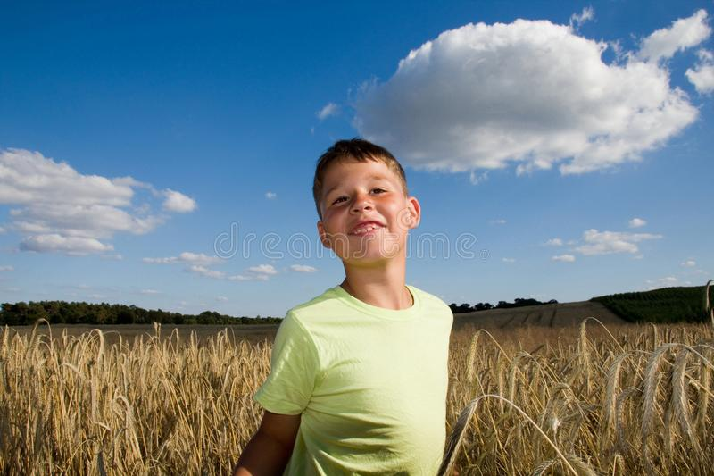 Boy in the wheat field royalty free stock image