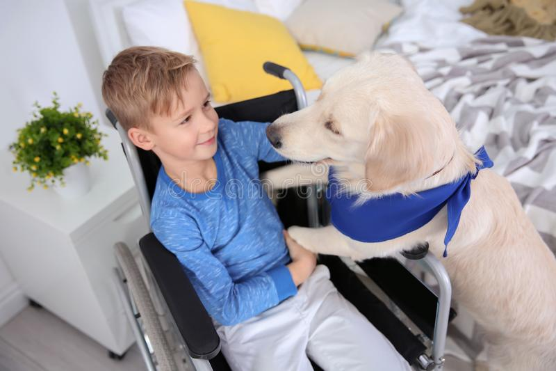 Boy in wheelchair with service dog. Indoors royalty free stock photography