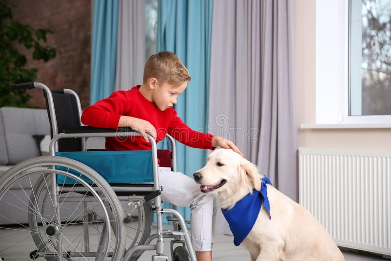 Boy in wheelchair with service dog. Indoors stock photo