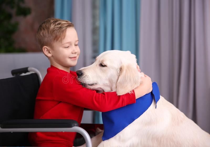 Boy in wheelchair with service dog. Indoors stock photos
