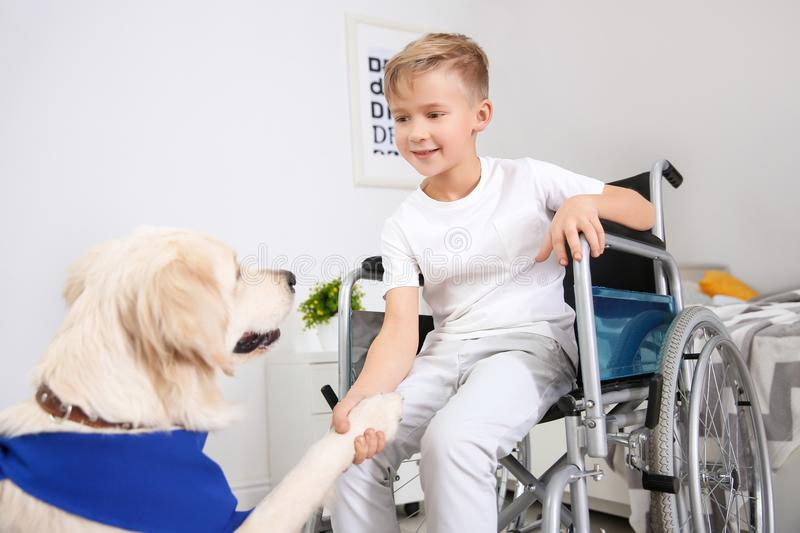 Boy in wheelchair with service dog. Indoors stock image