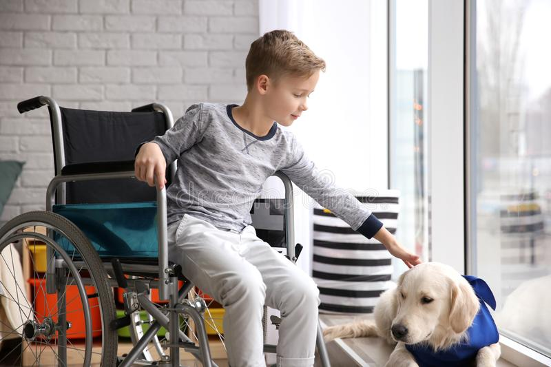 Boy in wheelchair with service dog. Indoors royalty free stock image