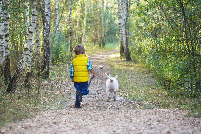 A boy and a white English bull terrier stock photos