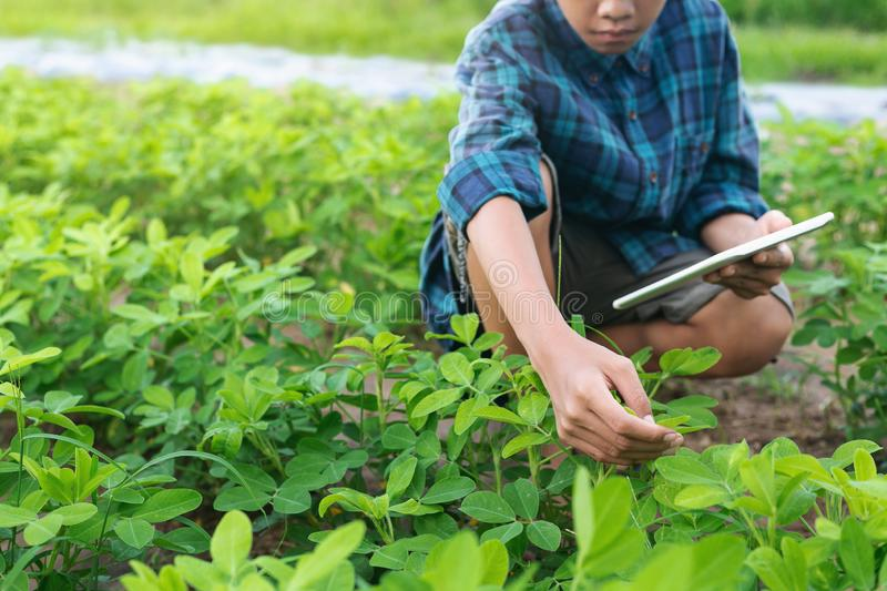 Boy young smart farmer Inspecting study Bean plant cultivation stock image