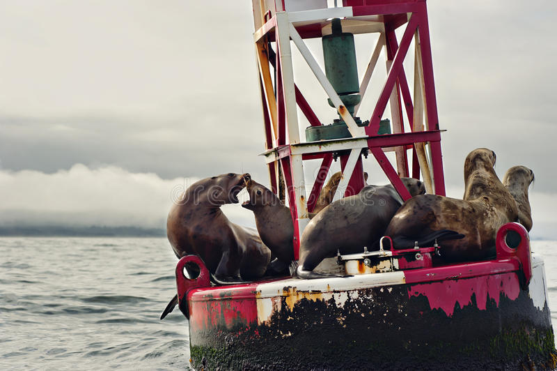 Boya del mar foto de archivo