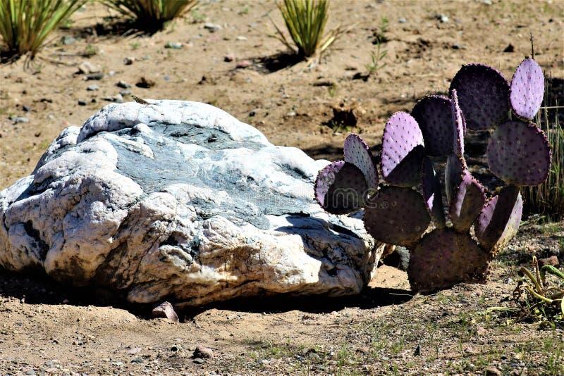 Boyce汤普森树木园国家公园,优胜者,亚利桑那美国 库存图片