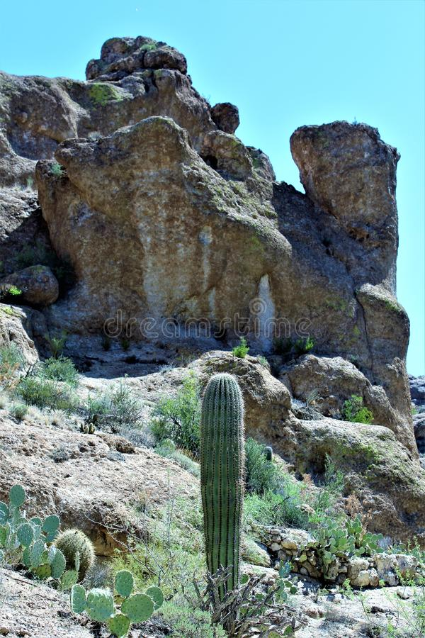 Boyce汤普森树木园国家公园,优胜者,亚利桑那美国 免版税库存照片