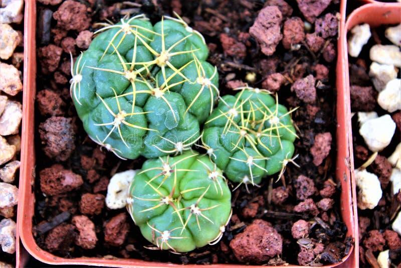 Boyce Thompson arboretum stanu park, przełożony, Arizona Stany Zjednoczone obraz stock