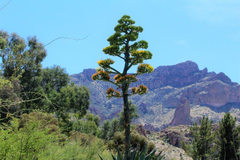 Boyce Thompson arboretum stanu park, przełożony, Arizona Stany Zjednoczone obrazy royalty free
