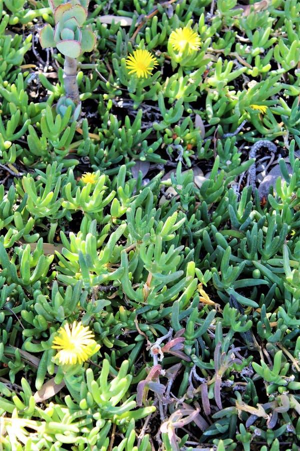Boyce Thompson Arboretum State Park, supérieur, Arizona Etats-Unis photographie stock