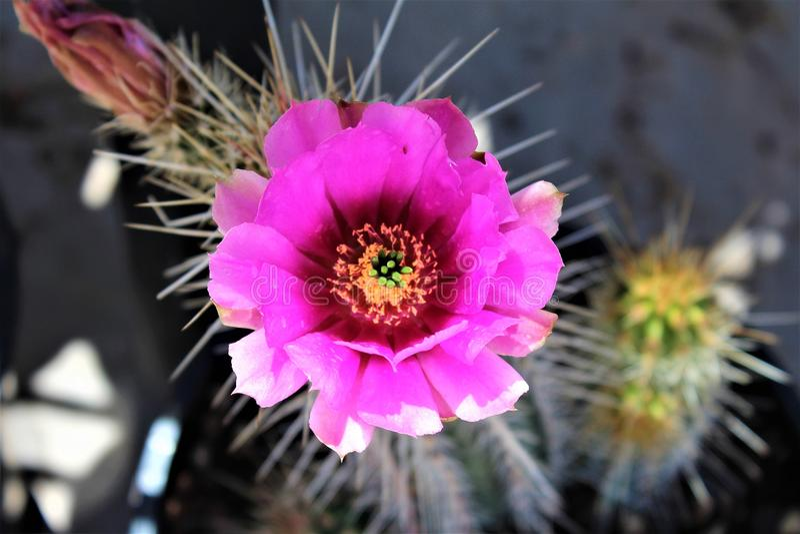 Boyce Thompson Arboretum State Park, supérieur, Arizona Etats-Unis image stock