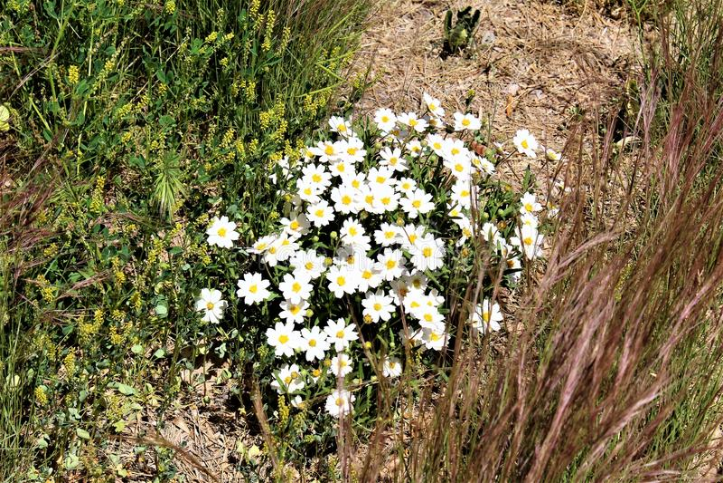 Boyce Thompson Arboretum State Park, supérieur, Arizona Etats-Unis photo stock