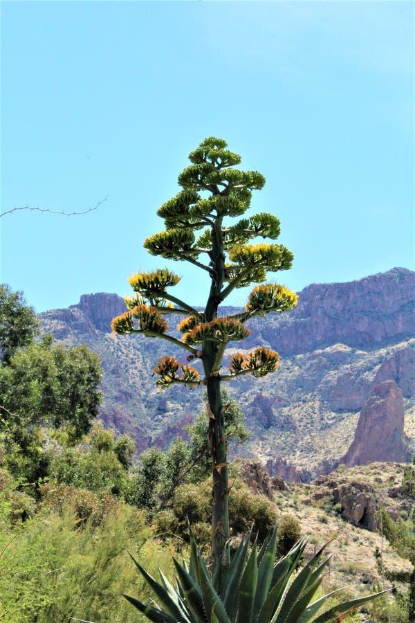 Boyce Thompson Arboretum State Park, supérieur, Arizona Etats-Unis photo libre de droits