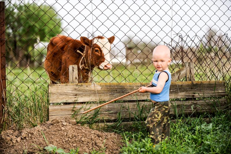 Boys feed chickens and farm animals on their father`s farm in the countryside stock image