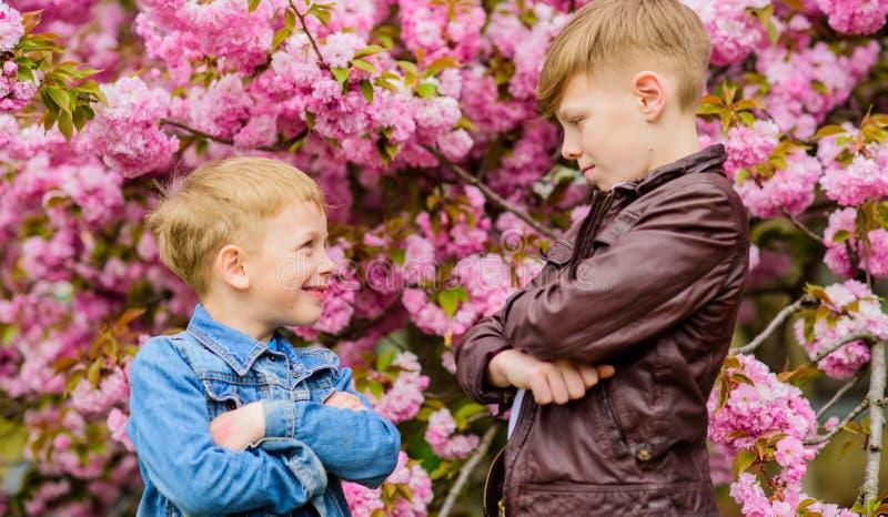 Boys posing near sakura. Kids spring pink flowers of sakura tree background. Botany concept. Brothers enjoying cherry royalty free stock photo