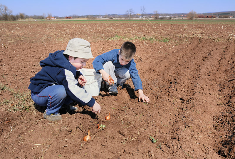 Boys sowing onion. Two cute boys playing and sowing onion stock image