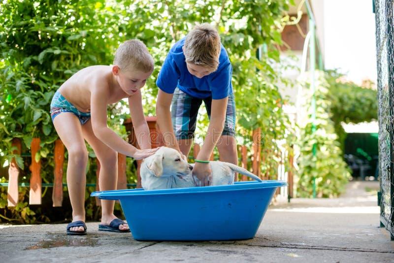 Boys are washing their dog. Two boys washing their dog, wearing summerwear and having fun royalty free stock photos
