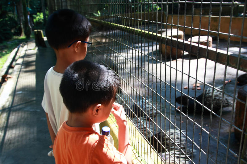 Download Boys at the Zoo stock photo. Image of caged, spike, vacation - 19606086
