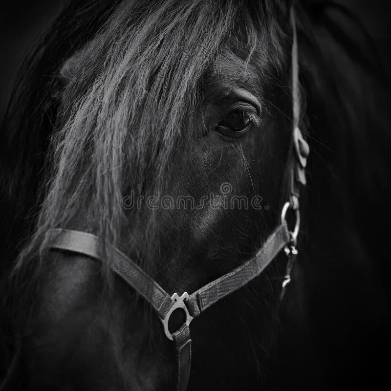 Bozal de un caballo. fotografía de archivo