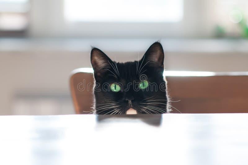 Bozal de un gato negro imagen de archivo libre de regalías