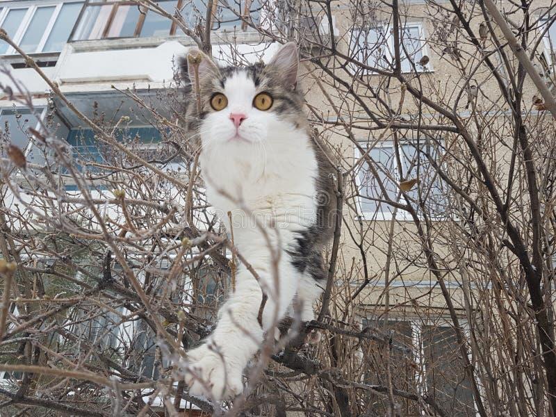 Bozal del gato imágenes de archivo libres de regalías