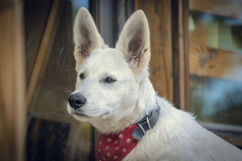 Bozal del perro del primer fotos de archivo libres de regalías