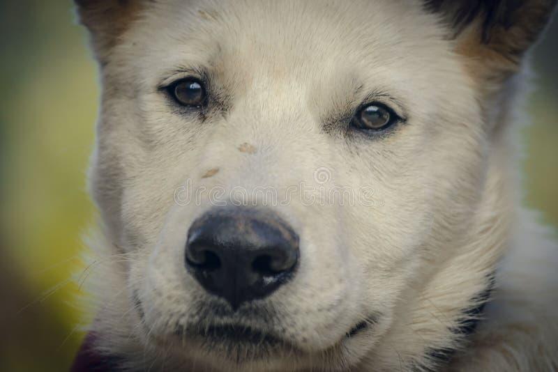 Bozal del perro del primer foto de archivo