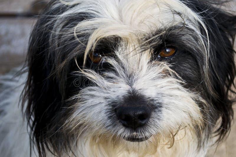 Bozal del perro del primer imagen de archivo