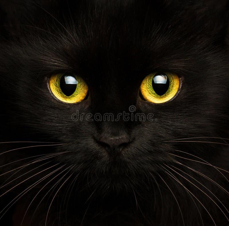 Bozal lindo de un cierre del gato negro para arriba fotografía de archivo