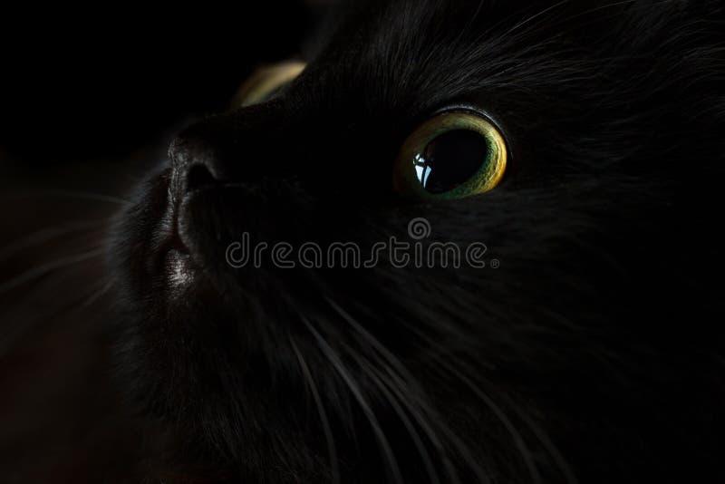 Bozal lindo de un gato negro imagenes de archivo