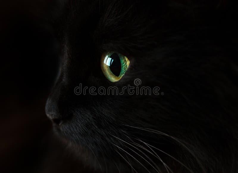 Bozal lindo de un gato negro fotografía de archivo