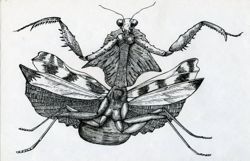 Boze bidsprinkhanen vector illustratie