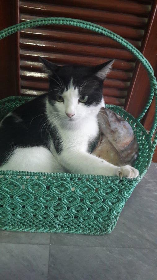 Boze kat in mand stock afbeeldingen