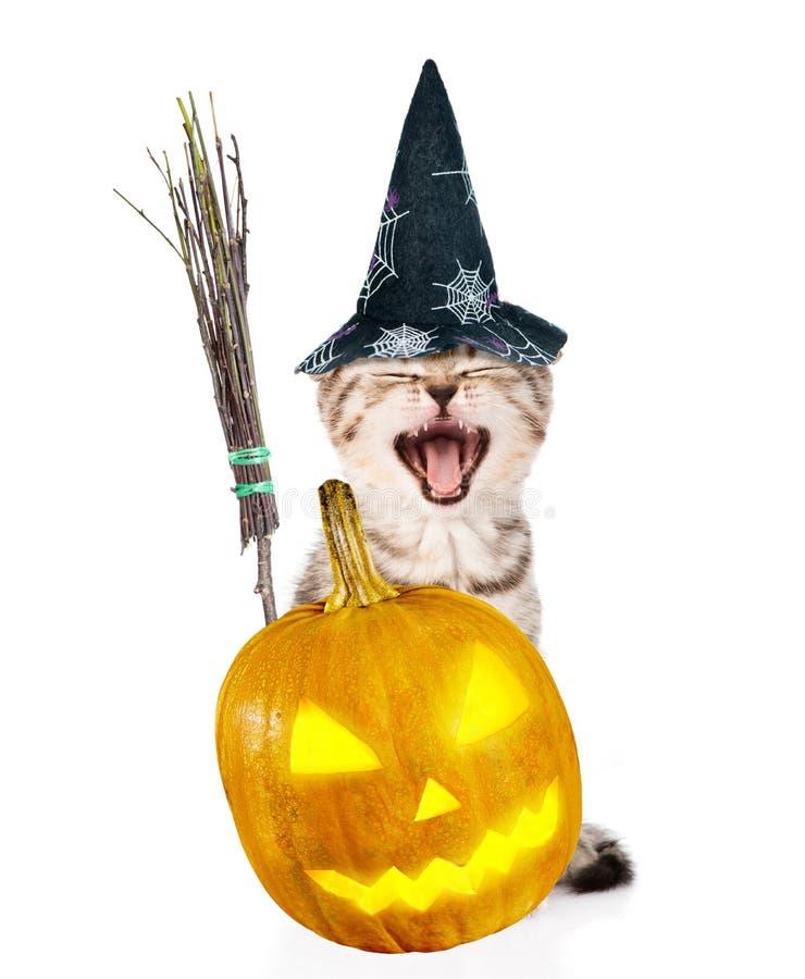 Boze kat met de stok, de pompoen en de hoed van de heksenbezem voor Halloween Geïsoleerd op wit stock afbeelding