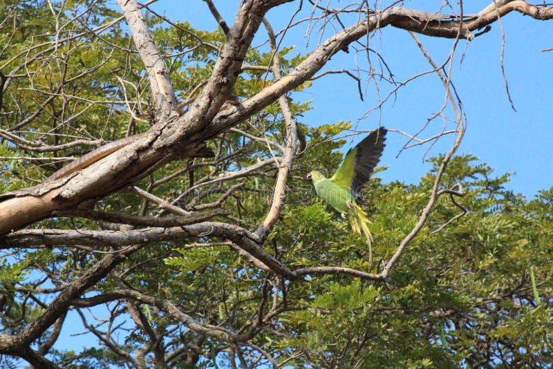 Boze papegaai stock foto's